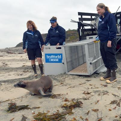 SeaWorld San Diego releases rehabilitated sea lion