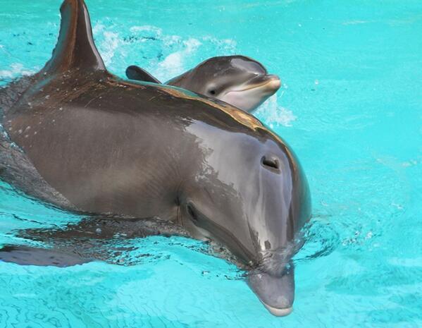 A Dolphin is Born!